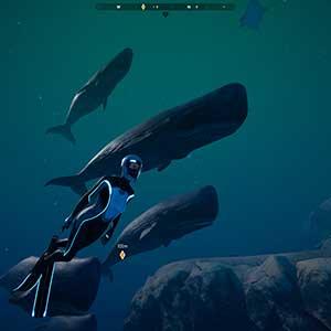 interactuar con el océano