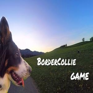 BorderCollie