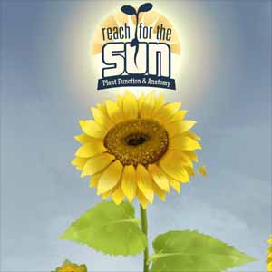 Comprar Reach for the Sun CD Key Comparar Precios