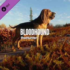 Comprar theHunter Call of the Wild Bloodhound Xbox One Barato Comparar Precios