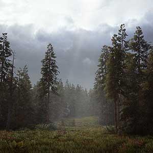 el desierto y los bosques