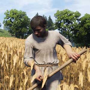 Cultivos agrícolas de la Medieval Dynasty