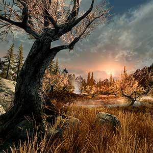 The Elder Scrolls 5 Skyrim VR - Bosque