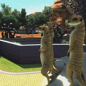 zoo tycoon meerkats